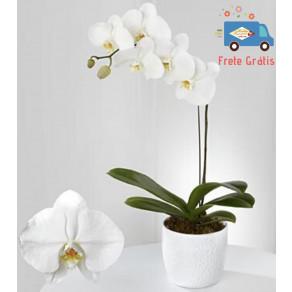 ORQUIDEA PHALAENOPSIS BRANCA FP420